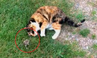 Mèo thích thú chơi cùng chuột