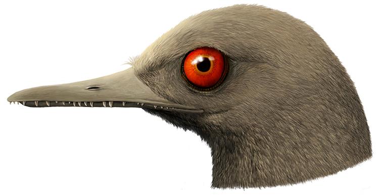 O. khaungraae có mỏ dài chứa tới 100 chiếc răng. Ảnh: SWNS.
