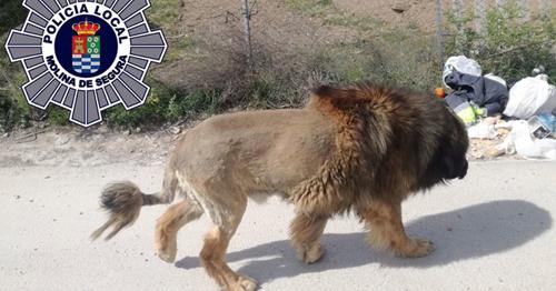 Con sư tử mà người dân nhìn thấy thật ra là một chú chó.