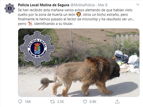 Thông tin của sở cảnh sát về sư tử thật sự là một chú chó.