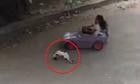 Bé gái say sữa lái ôtô khiến mèo con choáng váng