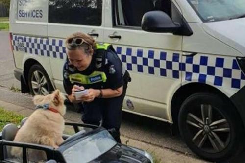 Cún cưng bị cảnh sát bắt giữ vì lái Mercedes phóng trên lề đường - 1