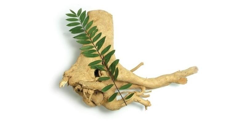 Rễ cây bá bệnh chứa thành phần kháng viêm và chống tăng sinh ở tế bào khối u.