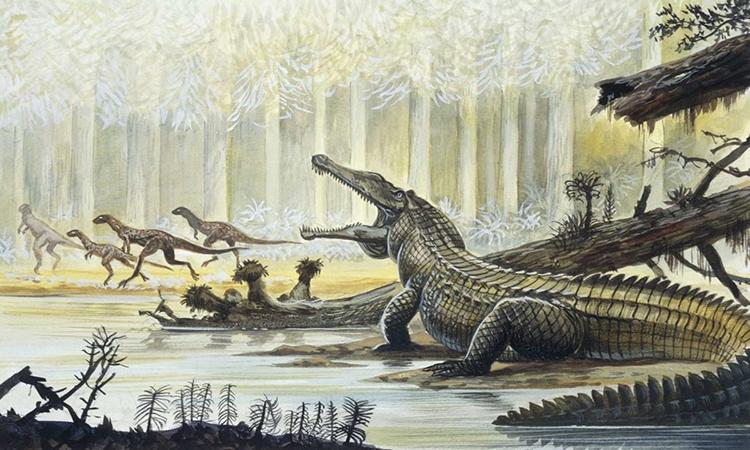 Cá sấu đã có mặt trên hành tinh của chúng ta từ thời khủng long. Ảnh: DeAgostini.