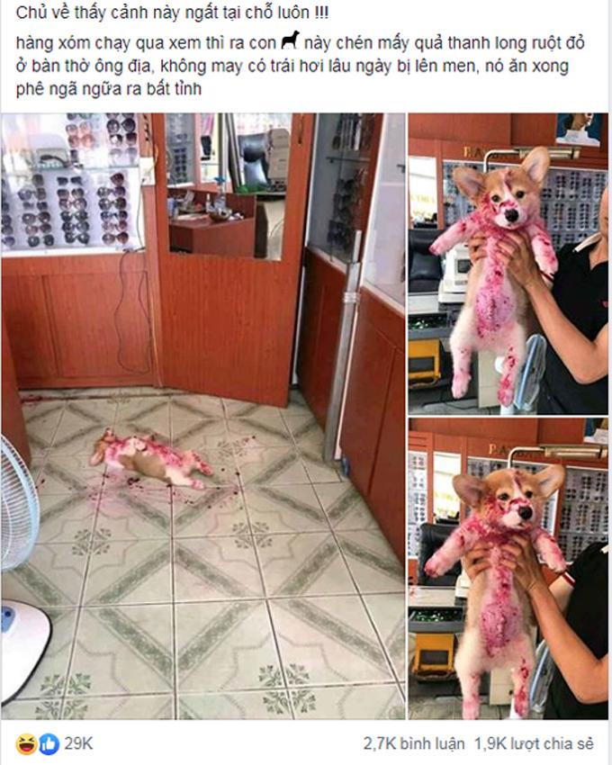 Chủ tá hỏa khi thấy cún cưng ngất xỉu giữa nhà