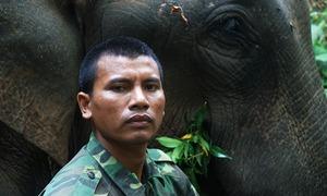 Con voi đặc biệt của người quản tượng