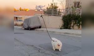 Dùng drone dắt chó đi dạo để tránh Covid-19