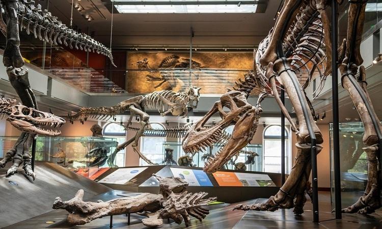 Hóa thạch động vật tiền sử trong bảo tàng. Ảnh: Alamy.