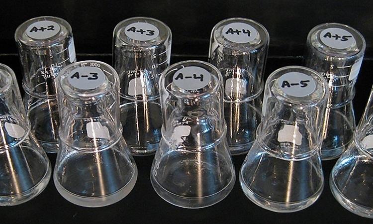 Dụng cụ dùng để nghiên cứu E. Coli trong thí nghiệm dài hạn của tiến sĩRichard Lenski. Ảnh: NYT.