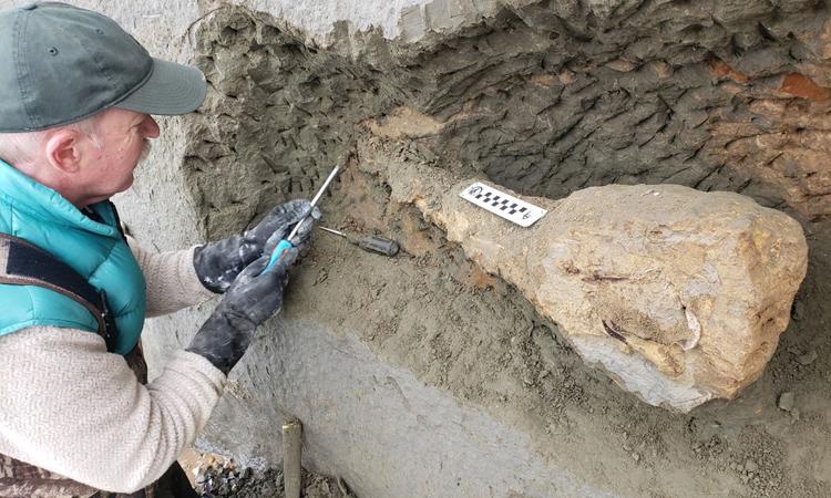Vách đá xói mòn để lộ hóa thạch 15 triệu năm tuổi