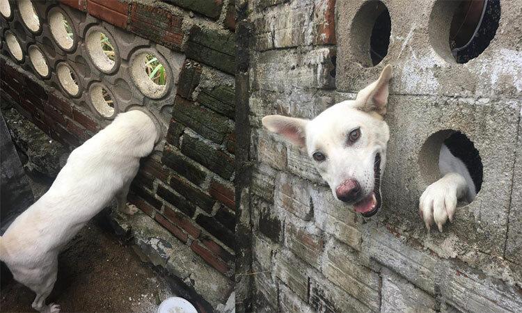 Khổ chủ đập tường vì cún cưng nghịch dại