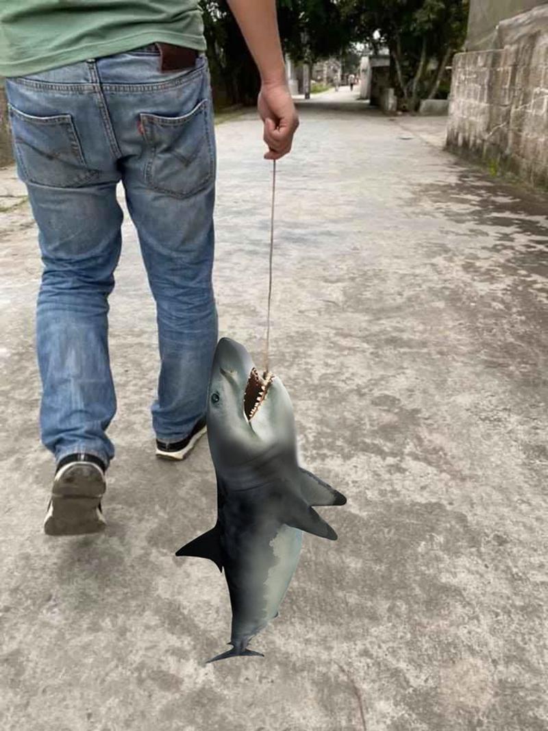 Câu được hẳn cá mập mới oách.