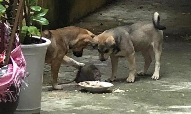 Bố mẹ cún chăm chút bữa ăn cho chuột