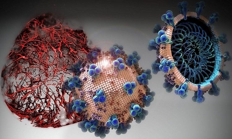 hrsACE2 ức chế quá trình nhân lên của nCoV. Ảnh:IMBA/Tibor Kulcsar.