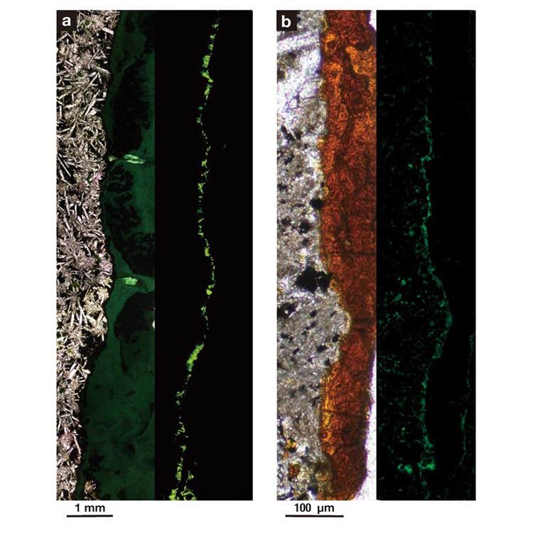 Ảnh phóng đại chụp bằng ánh sáng huỳnh quang cho thấy vi khuẩn xuất hiện dày đặc trong vết nứt đá bazan dưới đáy biển. Ảnh: CNN.