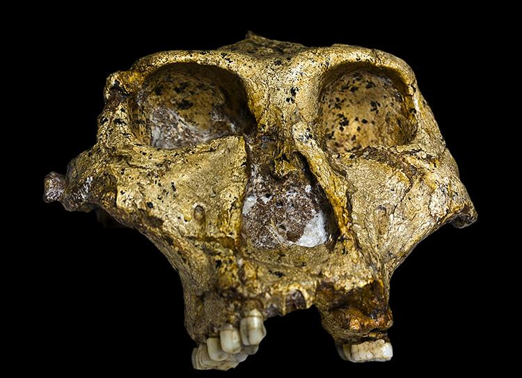 Hành vi loài người từ hàng triệu năm trước qua hóa thạch