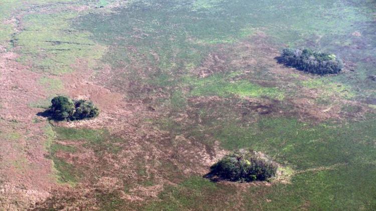 Các đảo rừng trên thảo nguyênLlanos de Moxos. Ảnh: BBC.