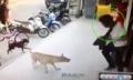 Thanh niên hổ báo suýt bị cắn vì trêu chó