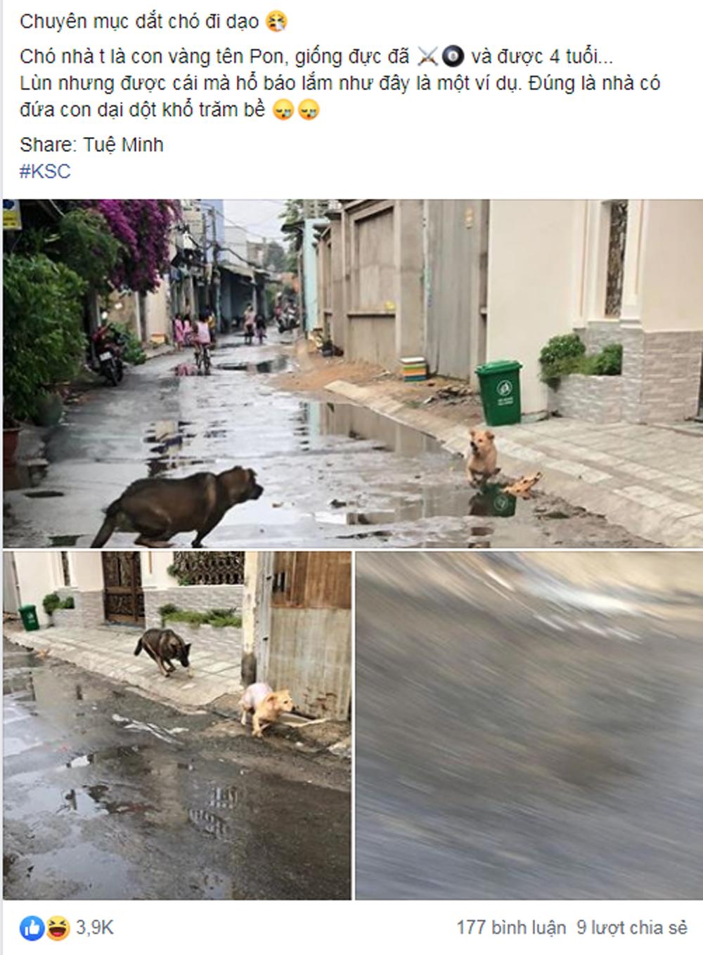 Chủ khổ sở vì chó cưng hổ báo bị đuổi chạy trối chết