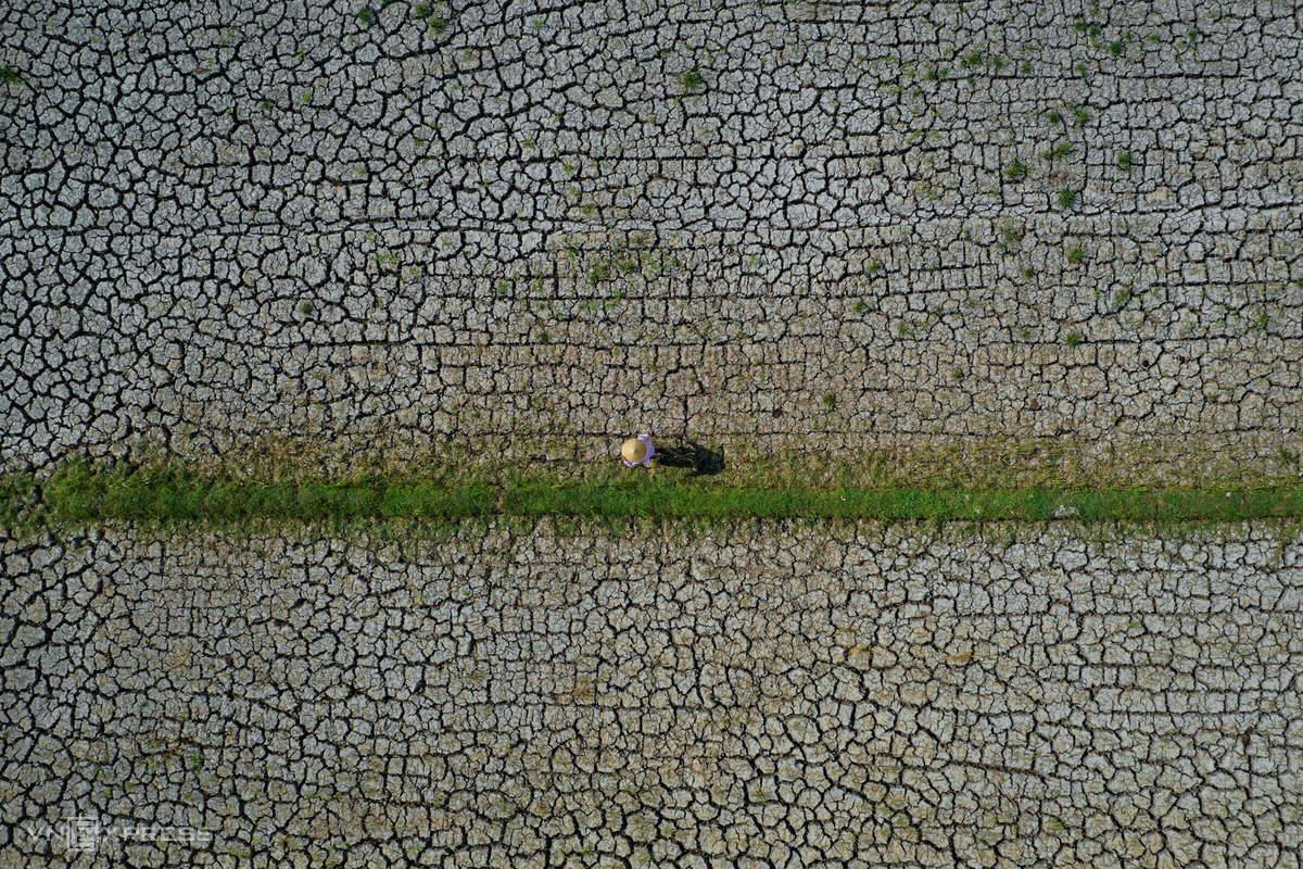 Một cánh đồng lúa tại xã An Phú Trung (tỉnh Bến Tre) khô hạn, đất nứt nẻ, chỉ còn các loại cỏ chịu mặn mọc lác đác. Ảnh: Hữu Khoa