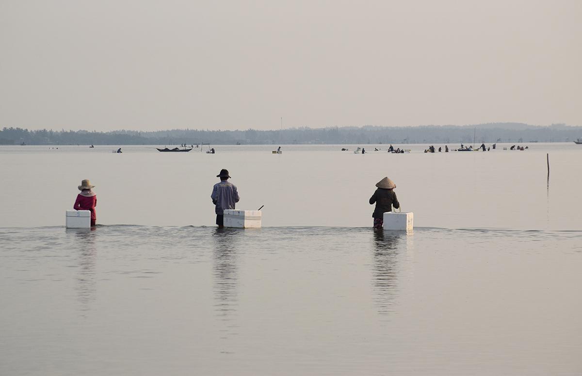 Sáng sớm, người dân xã Tam Hiệp ra sông Trường Giang vớt rong rau câu. Ảnh: Đắc Thành.