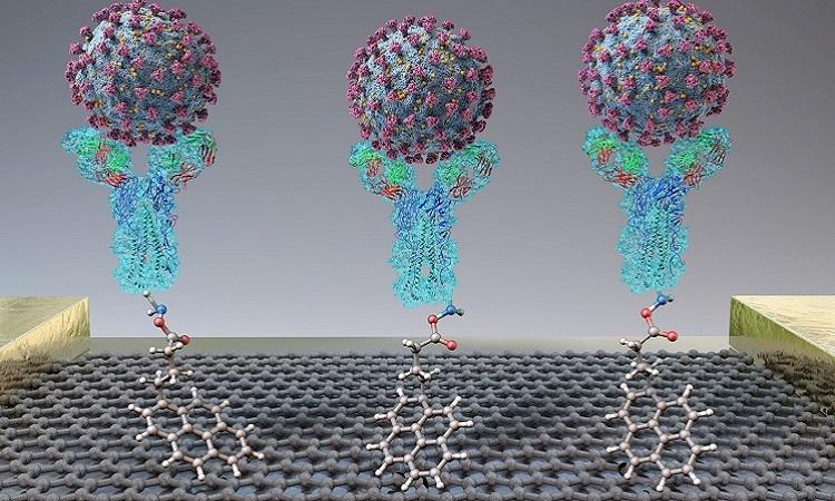 Liên kết giữa protein hình gai của nCoV và kháng thể tạo ra dòng điện. Ảnh: Phys.org.
