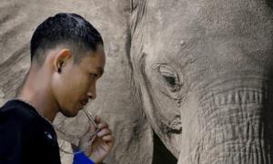 'Bảo mẫu' của voi rừng