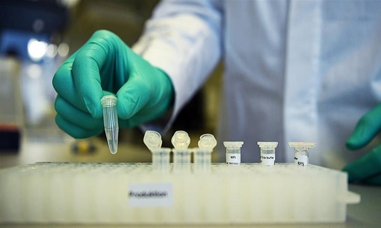 Vaccine ngừa nCoV của Đại học Oxford hiệu quả trên khỉ vàng. Ảnh: Kashmir Observer.