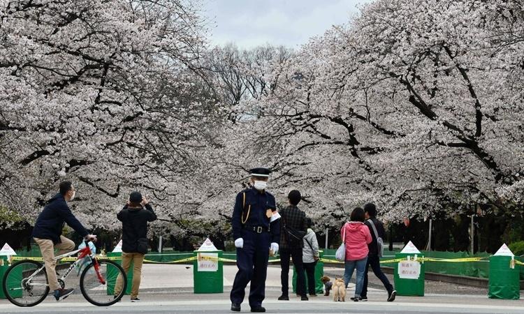 Một điểm ngắm hoa anh đào nởMột điểm ngắm hoa anh đào nở ở công viên Ueno, Nhật Bản, ngày 28/3. Ảnh: AFP.