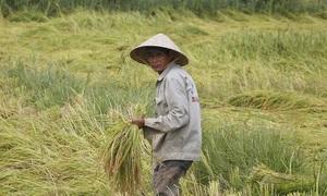 'Nâng giá lúa, giữ nông dân'