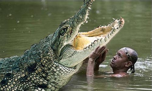 Phấn khích khi xem bữa ăn của cá sấu khổng lồ - 2