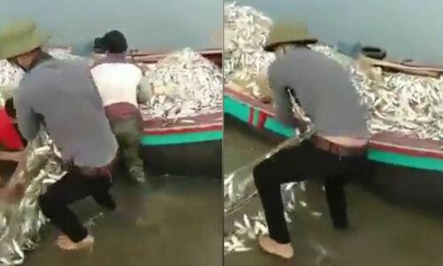 Ngư dân sung sướng bắtcá ngừ mắc cạn trên bờ biển  - 1