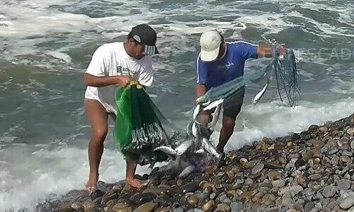 Ngưdân sung sướng bắtcá ngừ mắc cạn trên bờ biển  - 2