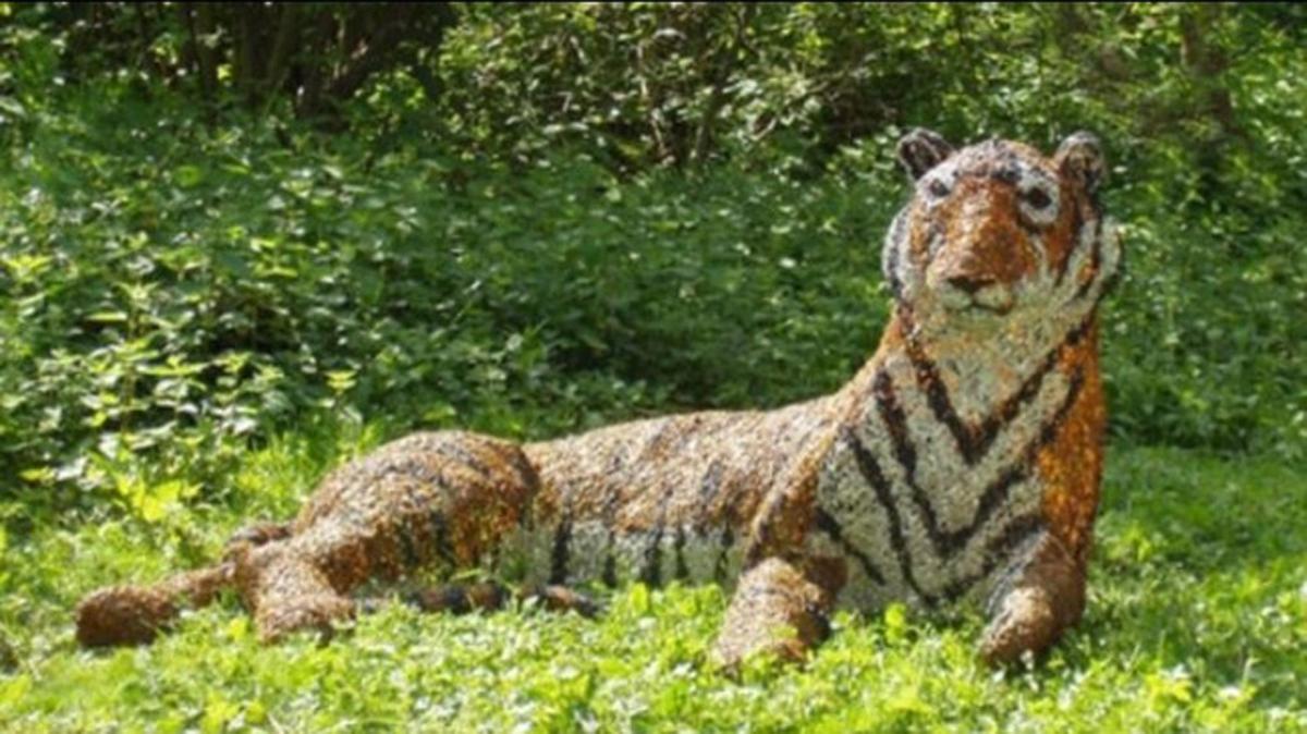 Con hổ giả đặt cách lối đi bộ của con người tận 30 mét.