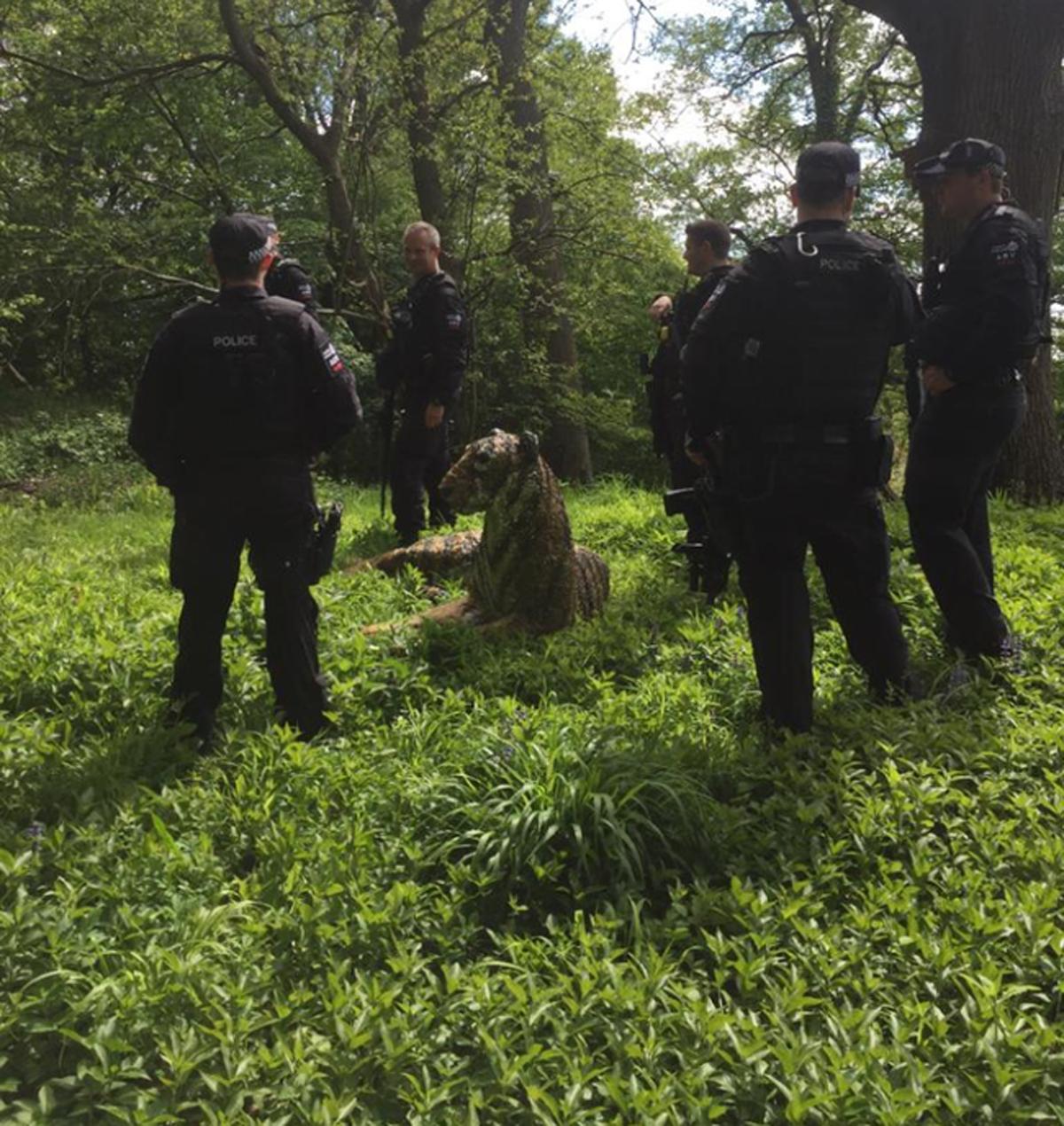 Lực lượng cảnh sát cùng trực thăng đã tóm được con hổ.