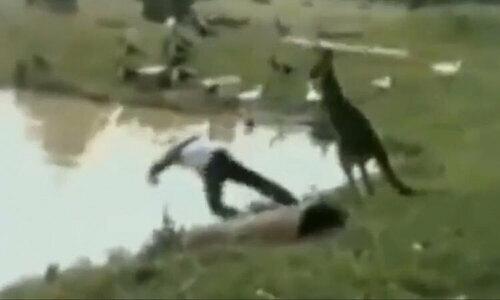 Chó no đòn vì vào lãnh thổ của mèo - 3