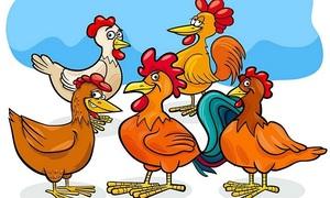 Bài toán tính số gà đang nhặt thóc khiến bạn rối não