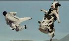 Làm sao xếp 10 con bò thành 5 hàng, mỗi hàng 4 con?