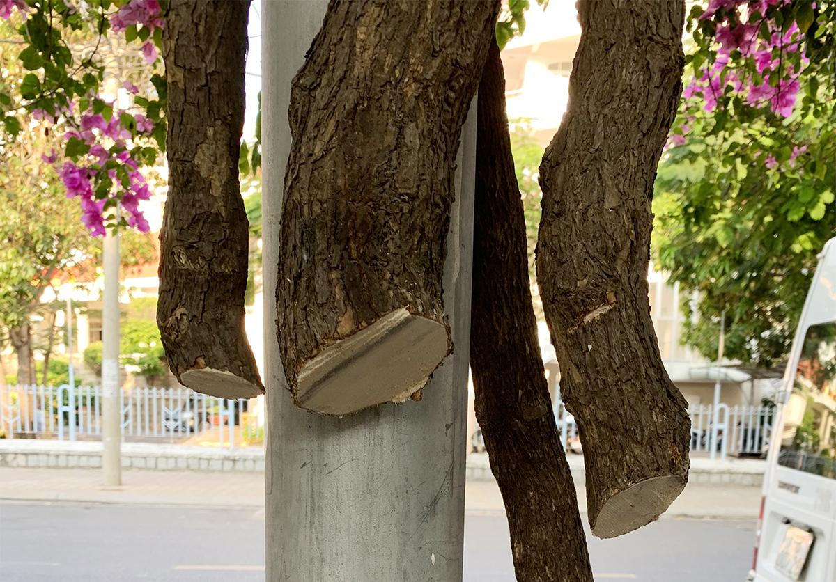Một gốc cây hoa giấy bị cắt trộm trên đường Trần Hưng Đạo, ngày 27/3. Ảnh: Văn Hương.
