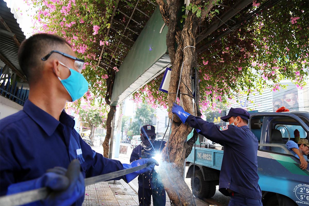 Anh Huỳnh Tấn Mẹo cùng các nhân viên đang lắp khung sắt hoa giấy trên đường Lý Thánh Tôn ở Nha Trang. Ảnh: Xuân Ngọc.