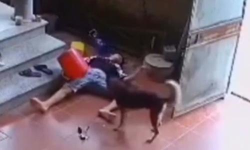 Cún cưng tá hỏa vì bị chủ chơi khăm - 2