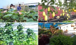 Những khu vườn độc đáo trên sân thượng