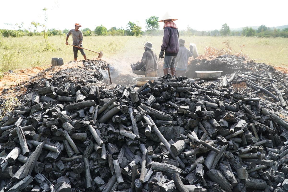 Mỗi lò cho ra khoảng 600 kg than thành phẩm. Ảnh: Việt Quốc.