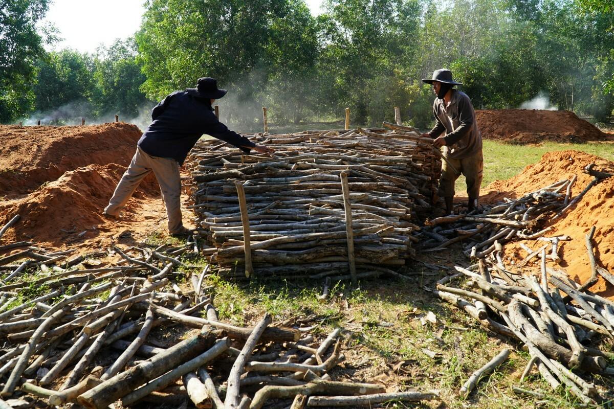 Hiện nguyên liệu làm than là củi keo lá tràm, bạch đàn sau khi thu hoạch rừng trồng. Ảnh: Việt Quốc