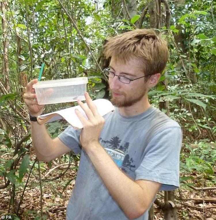 Tiến sĩ Penny kiểm tra một mẫu vật S. troschaueri. Ảnh: PA.