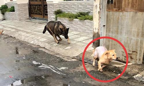 Chạy thục mạng vì chó đuổi - 2