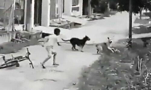 Chạy thục mạng vì chó đuổi - 3