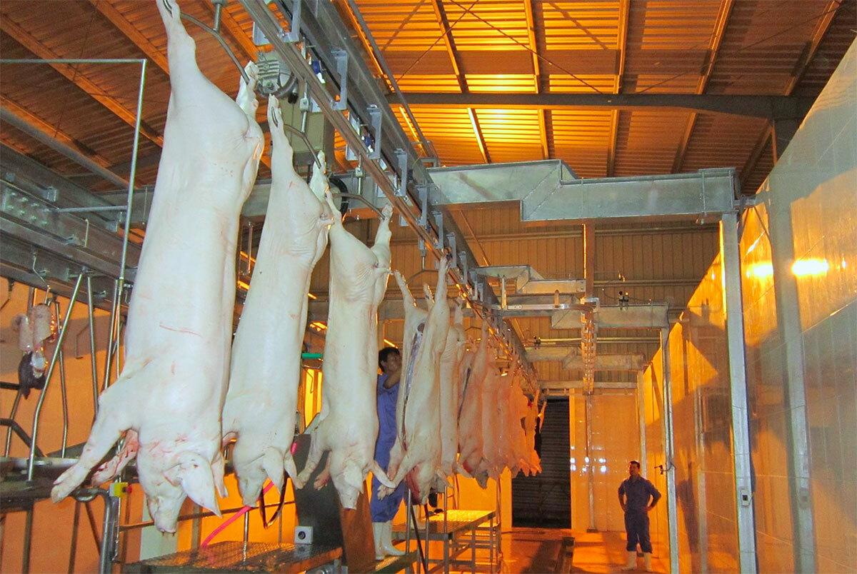 Dây chuyền giết mổ lợn của nhà máy súc sản Mitraco hồi tháng 12/2015. Ảnh: Đức Hùng
