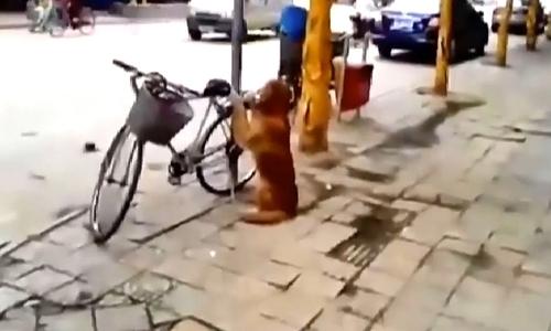 Chó cưng trông xecho cô chủ đi chợ  - 2