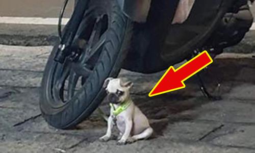 Chó cưng trông xe cho cô chủ đi chợ - 2